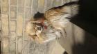 我家的猫狗