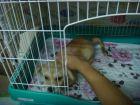 谁家可爱的小狗丢了,快来领哦~~~(已经于2012.07.20日找到新家,祝福笑笑幸福快乐 ...