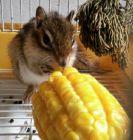 希希与玉米