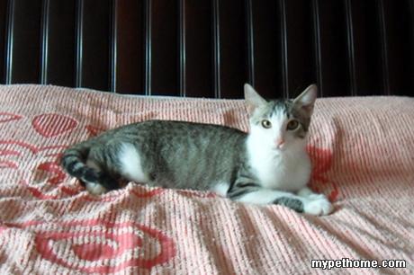 小猫之家 69 【懒悠悠宠物领养】可爱天然呆猫咪求领养  俺叫灰灰