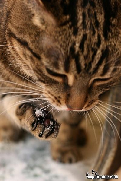 论坛 69 猫猫之家 69 小猫之家 69 猫友生活区 69 (转帖)雪地