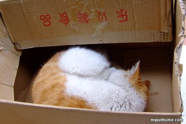 69 论坛 69 猫猫之家 69 小猫之家 69 一堆盒子猫~欢迎跟帖!