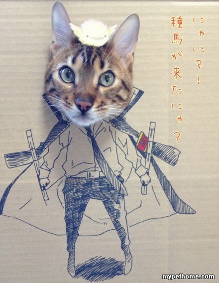 超可爱的猫咪搞怪图