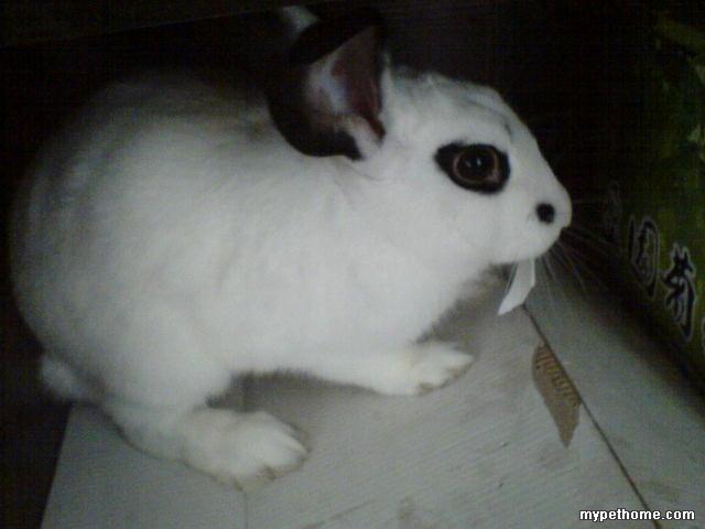 兔 一公一母九个月大 小兔之家 Powered by Discuz图片