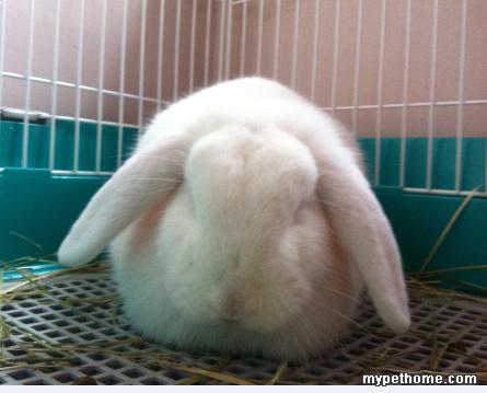 兔子睡觉的样子