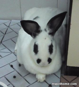 要是在黑心棉的高级隐身兔笼里,那是肯定看不见的 发表于 2013-6-23 12:45