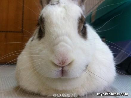 动物 兔子 440_328
