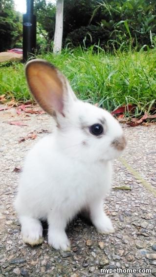 刚买两天的小兔子好像拉稀了,大家给看看呢!