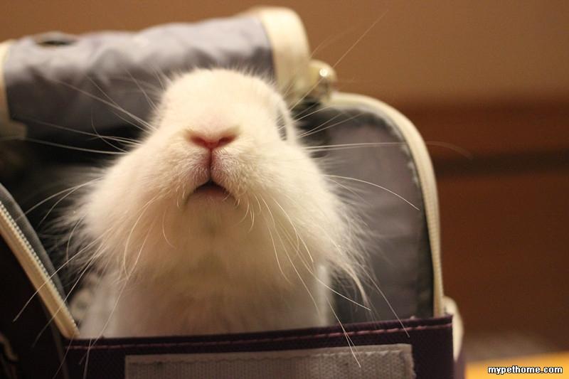 壁纸 动物 猫 猫咪 兔子 小猫 桌面 800_533