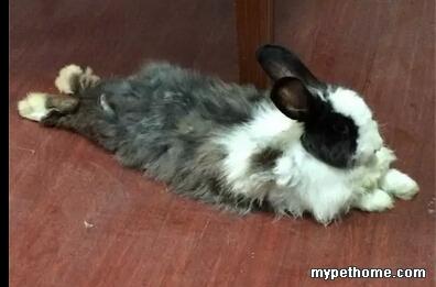 求助!~~兔子眼睛周围有脓包!