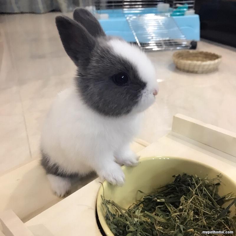 兔兔公母,傻傻分不清楚 小兔之家 Powered by Discuz图片