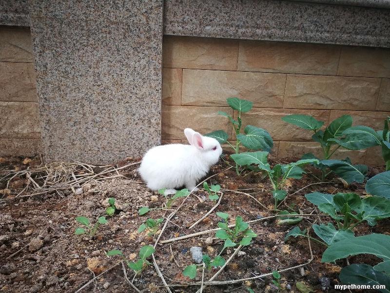 刚来我家的兔子
