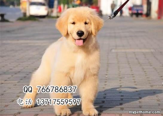 2_118060_ca70a1a806da8f1.jpg