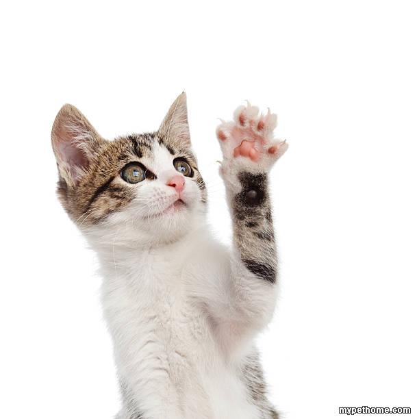 猫爪手账边框手绘
