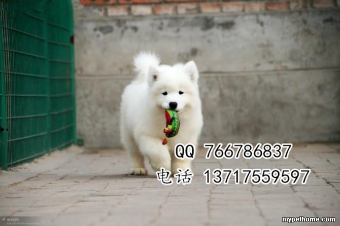 2_109813_6679446927355dc.jpg