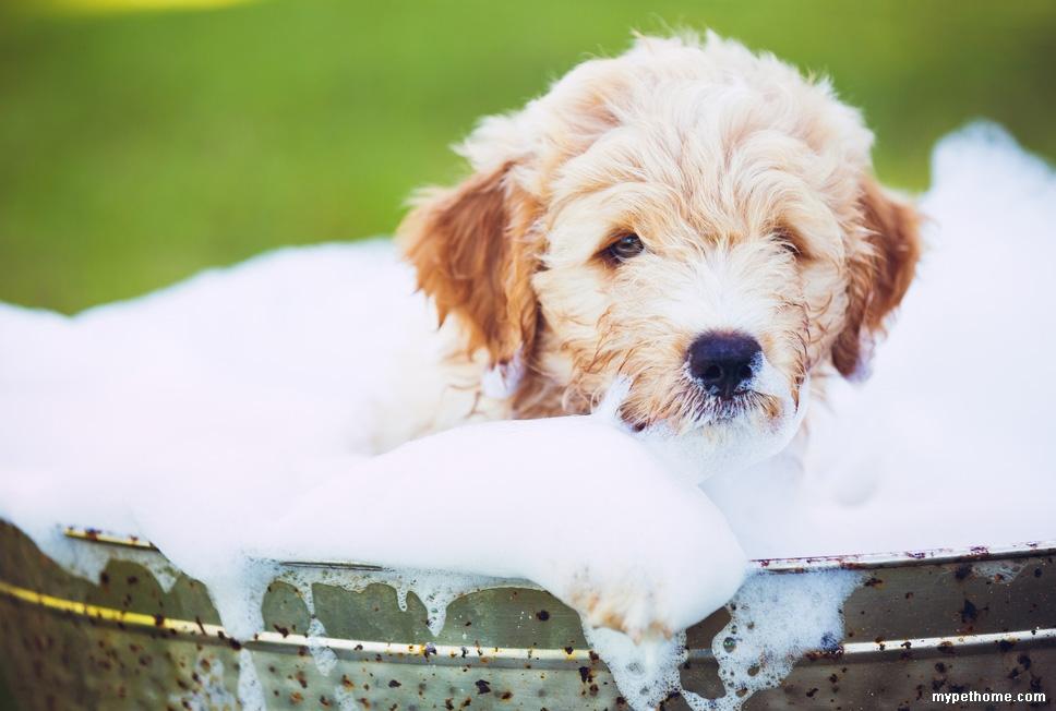 dog-bath-mistakes-main.jpg