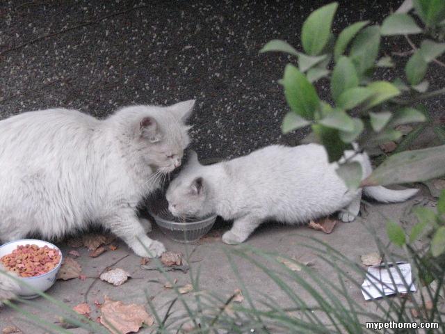 虽然是流浪猫,但是他们生活过的还是挺滋润,天天都有好多人给他们喂吃的,但是天气越来越冷了,又是生了小猫的母猫和小小的小猫,怕是也难挺过去。 这只母猫非常粘人,每次看到我提着东西过去都会叫着迎上来。小猫也非常可爱,眼睛特别漂亮。 如果有朋友愿意领养他们,请与我联系