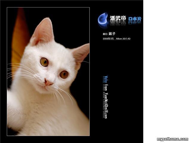 可爱的猫咪找领养