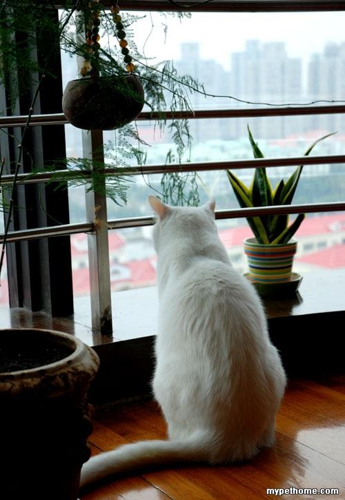 猫背影简笔画彩色