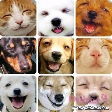 超可爱的宠物表情,加新了