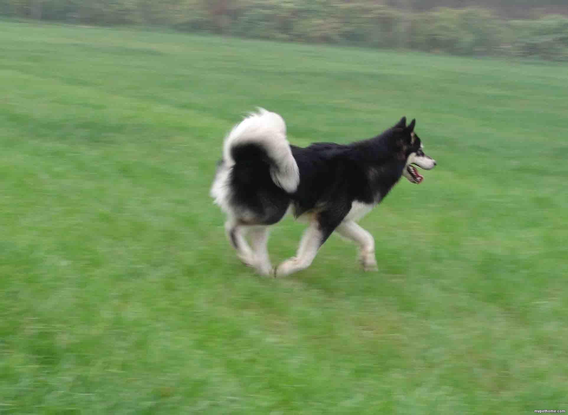 动物奔跑gif动态图片