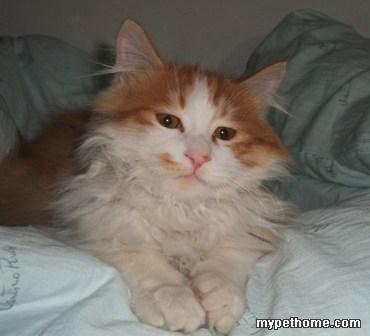 69 论坛 69 互帮互助 69 流浪的天使 69 四个月小猫,找领养