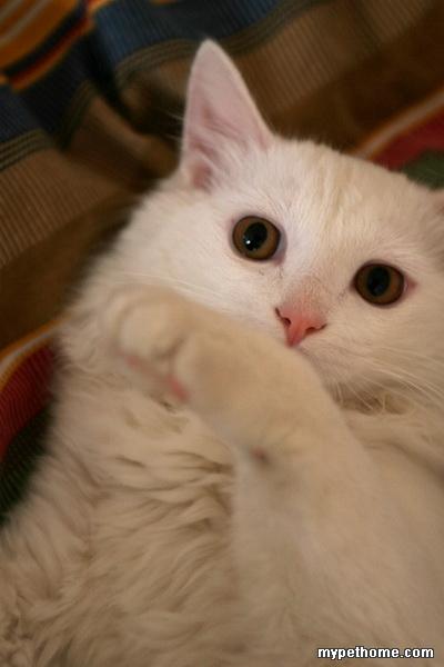 69 论坛 69 互帮互助 69 流浪的天使 69 可爱的半岁小猫求
