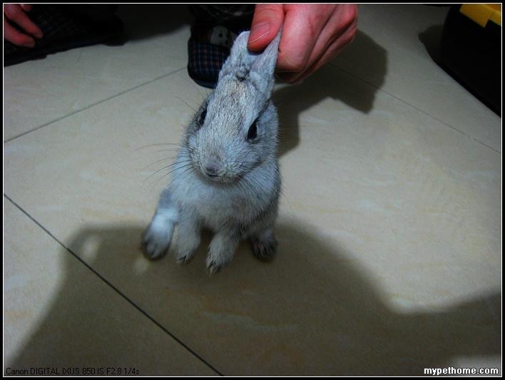 被关在小笼子连笼子带兔子扔在垃圾桶边.