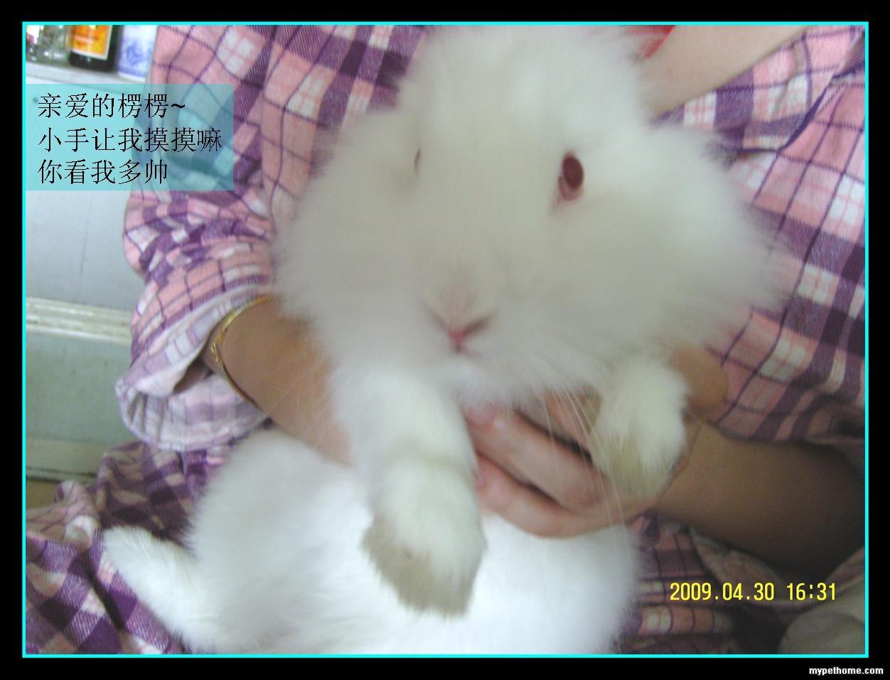 壁纸 动物 兔子 1252_957