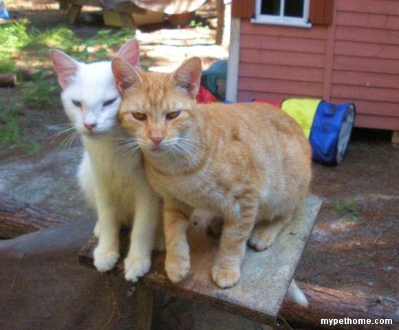 国外的猫咪农场-小猫之家