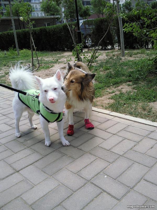两个动物的图片大全