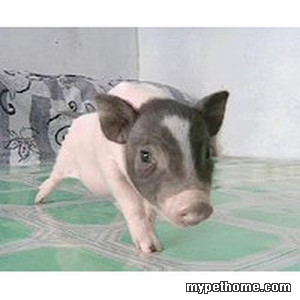 kl可爱动物头像