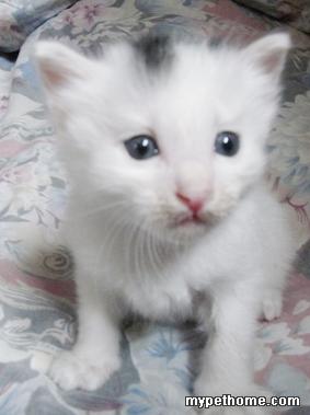 寻找有爱心的爱猫人士,领养超可爱的小猫咪