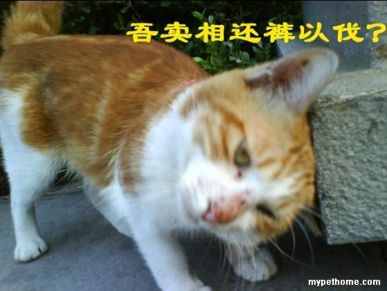 楼下橙白花纹的小猫背上烂掉了 可怜啊 大家帮忙看看是怎么回事?