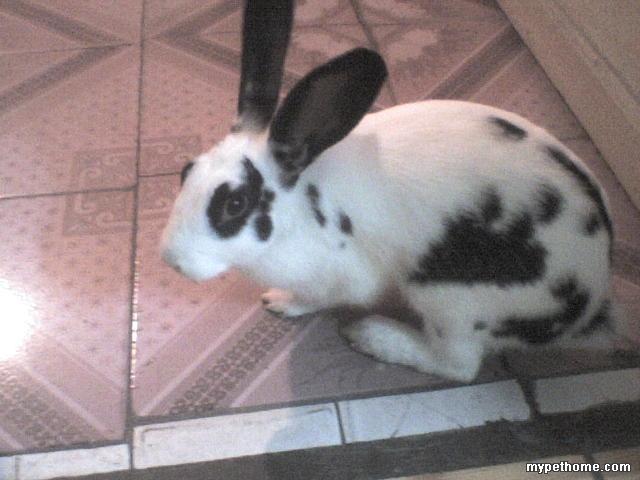 壁纸 动物 狗 狗狗 兔子 640_480