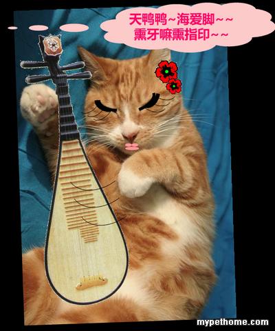 苹果手机壁纸可爱猫猫