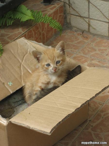2只断奶可爱幼猫求领养(广东珠海)