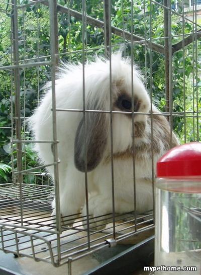 不过贝贝很上镜,照片比真兔好看……不想次次,照片永远没真兔可爱~!