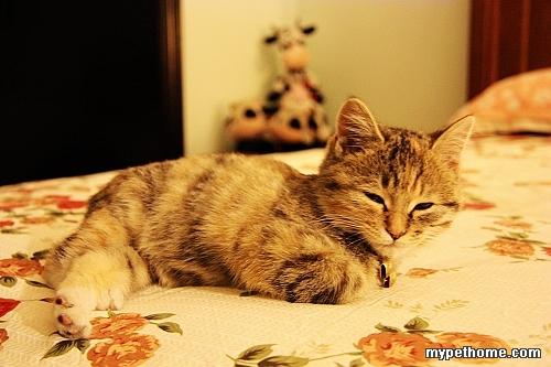 睡觉的小猫公仔