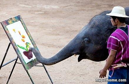 小动物,大智慧-北京之家