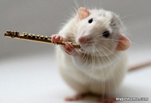 小动物,大智慧
