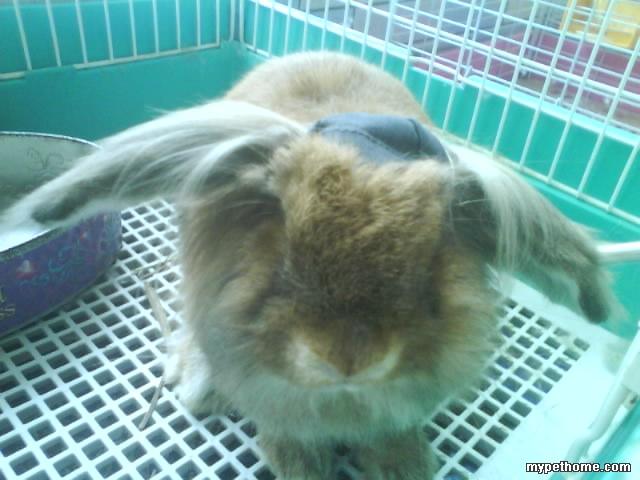 长发美女头发掉光,癞子兔没脸见人