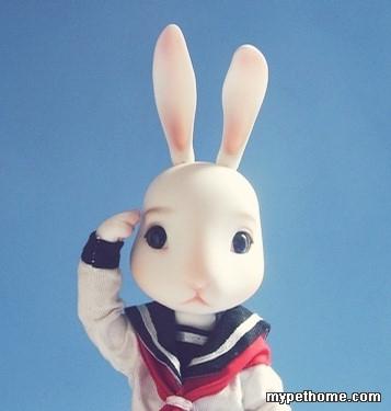 为虾米兔子总是抱着胡萝卜