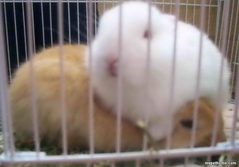 在我细心照料下,两只小兔子都非常可爱健康.