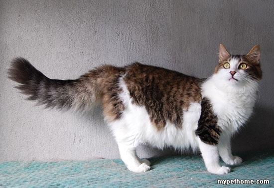可爱小奶猫和长毛漂亮猫咪们找领养-小猫之家