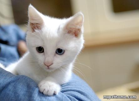 可爱至极的白色