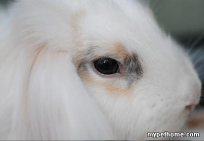 脸部动物妆容图片