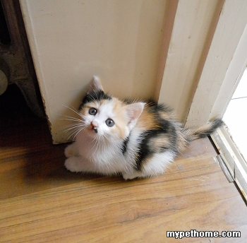 北京可爱的小奶猫,期待有缘人