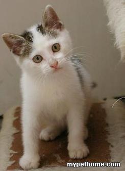 我和先生刚出大楼就 听到小猫叫声,一唤,一肥嘟嘟的小奶从一车下现身