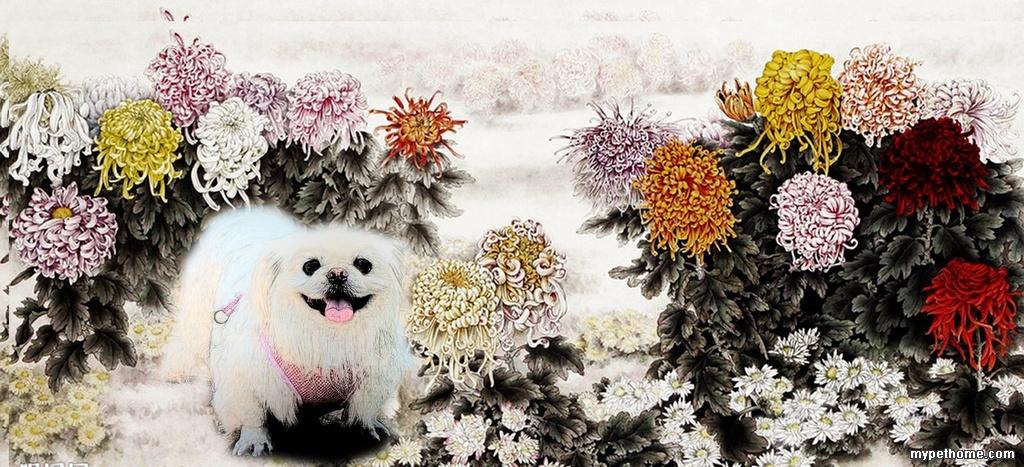 新学的ps 工笔画 mina 北京犬 之家